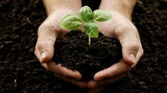 पौधे लगाना कुछ इस तरह सहायक होगा आपके स्वास्थय में
