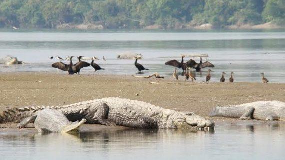 दुधवा नेशनल पार्कः कभी था आकर्षण का केंद्र, और अब है बुरा हाल