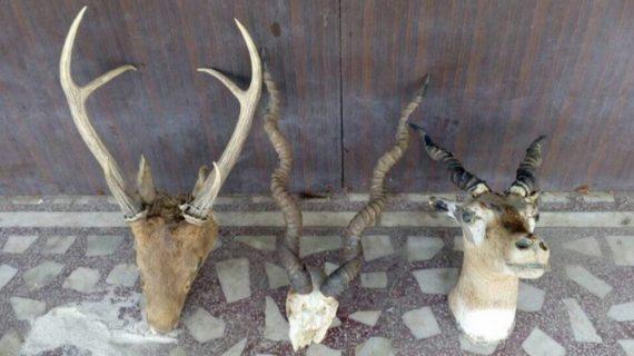 मेरठ में रिटायर्ड कर्नल के घर छापा, 1 करोड़ कैश ,वन्य जीवों की खालें बरामद