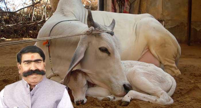 cow गो-तस्करी की चुकानी होगी बड़ी कीमत : ज्ञानदेव आहूजा