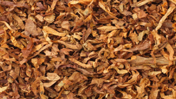 डॉ. रविकांत: तंबाकू सेवन से दस में से आठ में कैंसर जैसी बीमारी के लक्षण