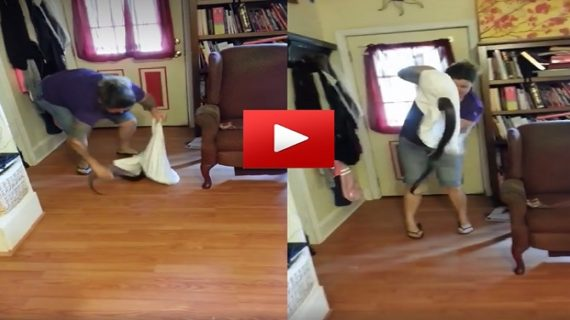 वीडियो वायरल: महिला ने तकिए में कैद किया 5-6 फूट का सांप