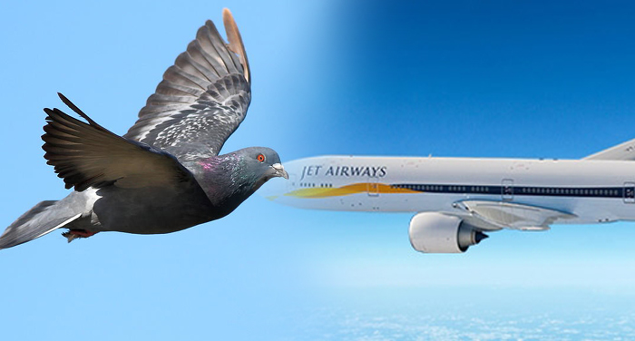 jet airways, flight, mumbai to jodhpur, suffer, bird, airport