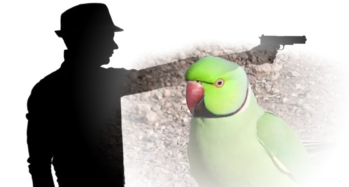 michigan, murder, case, parrot, woman, convicted, husband