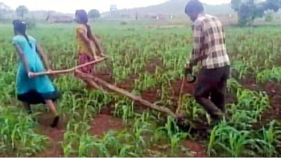 एक मजबूर किसान बाप, हल में बेलों की जगह बेटियों को जोड़कर करता है खेती