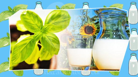 तुलसी के पत्ते वाला दूध कई बिमारियों को करता है दूर