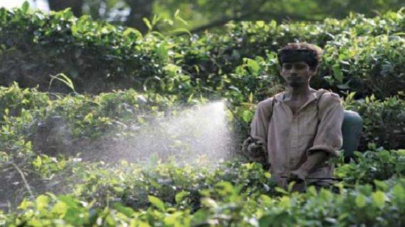 खेतों में डालने वाली कीटनाशक बनी महाराष्ट्र के किसानों की मौत का कारण