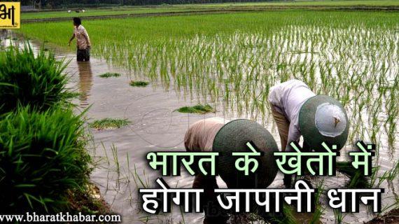 भारत के खेतों में होगा जापानी धान, कैथल में हुआ जापानी राइस मिल का उद्घाटन
